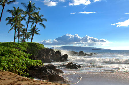 Tropical Hawaiian beach with palm trees