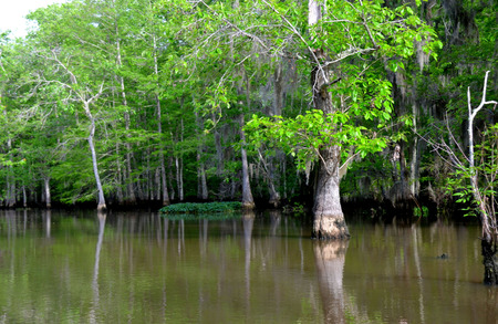 bayou swamp: Louisiana Bayou, swamp and cypress trees Stock Photo