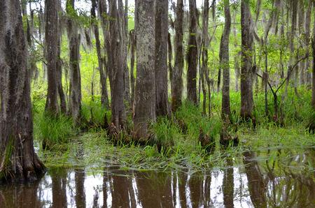 bayou swamp: Louisiana Bayou marshy swamp Stock Photo