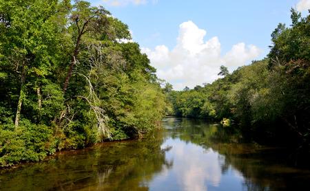 thru: Calm serene river lake water flowing thru tree forest