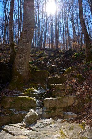 gully: Rocky gully path trail walkway through hardwood forest