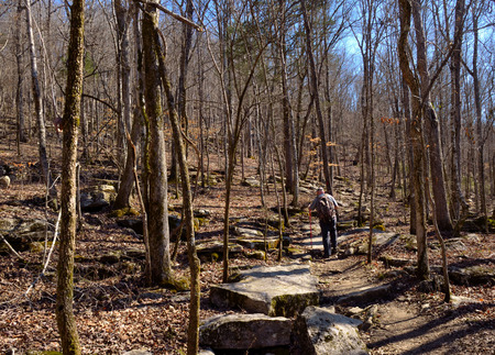 backpacking: Man hiking backpacking in hardwood forest