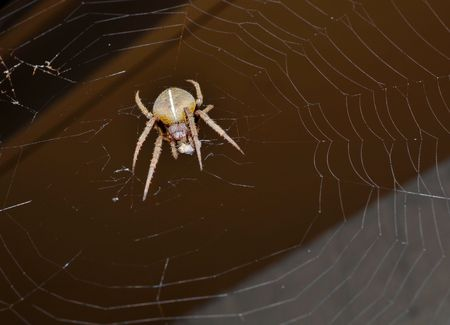 prey: Spider with prey wrapped in spider web