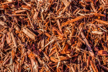 bark mulch: Wood bark, mulch, beauty bark.  Natural wood chips great for garden or landscape design.  Abstract background or backdrop.
