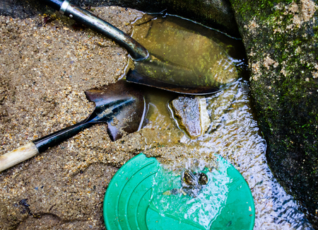 Gold panning and gem mining in mineral rich river stream. Fun and adventure, hobby of gold panning and gem mining. Gold pan and shovels in gravel and stream.