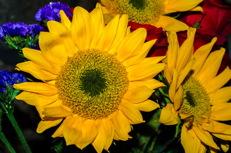 Vibrierender gelber Sonnenblumenblumenstrauß. Schöne Blumen für feierliche Veranstaltung. Standard-Bild - 88882975