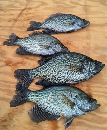 Crappiefische angezeigt auf hölzernem Brett. Fang des Fischers für den Tag. Standard-Bild - 90577575