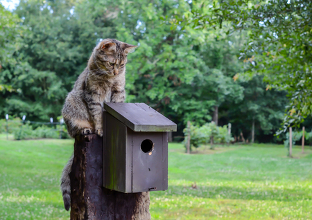 Domestic cat sitting on birdhouse, watching, waiting and hunting. Standard-Bild - 92109438
