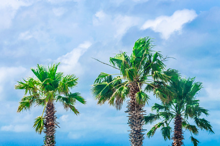 Tropical palm trees located at scenic travel destination location. Outdoor park scenery with dramatic sky and clouds. Stock Photo