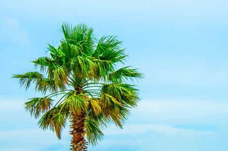 Tropical palm tree with bright blue skies. Concept of scenic travel to the tropics.