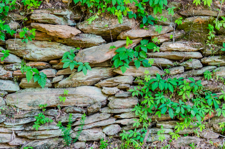 Rustic natural stone wall with foliage. Beautiful textured rock. Excellent natural scene for background.
