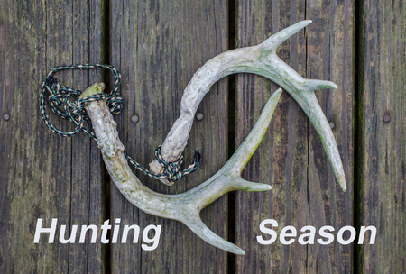 Hunting Season notice with deer antlers used for rattling horns. Fun recreational outdoor sport activity of deer hunting.