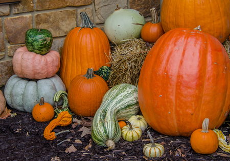 Autumn Fall Harvest Display. Celebrate seasonal autumn holidays, Halloween, Thanksgiving or Autumn Harvest festival.  Pumpkins, squash and gourd in arrangement.