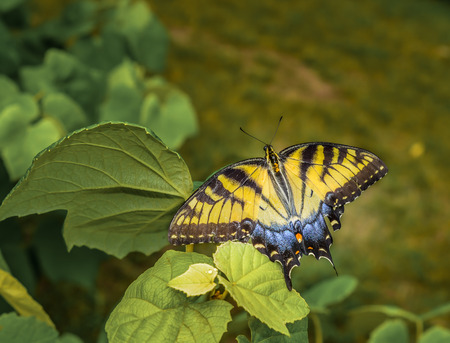 Beautiful butterfly with open wings in outdoor garden setting.