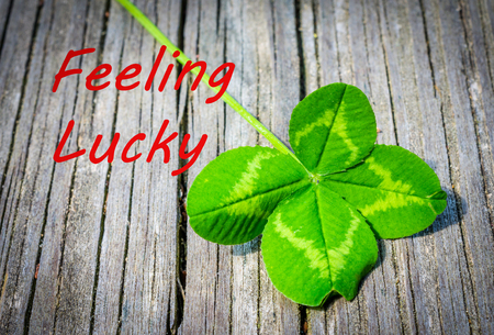 Feeling lucky announcement with real natural four leaf clover.  Celebrate Luck and good fortune with this nature inspired image.