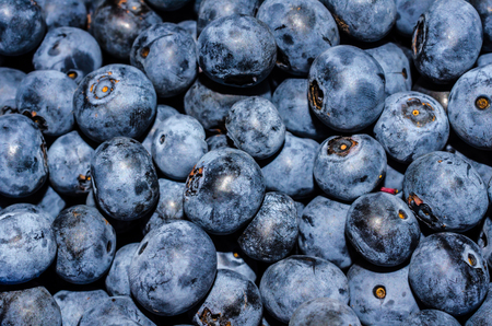Fresh healthy homegrown and harvested blueberries.  Nutritious and delicious natural fruit.