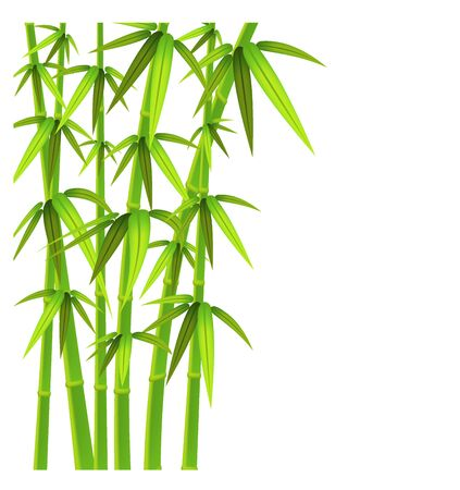 Green bamboo stalks and leaves on a white background with copy space. Vector illustration. Иллюстрация