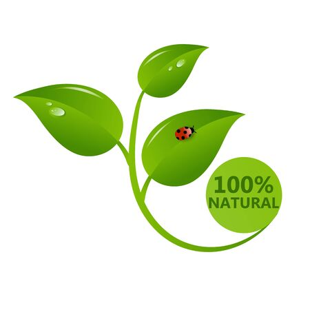 100 natural green label isolated on white background. Dewdrops and beetle on green leaves. Vector stock illustration.