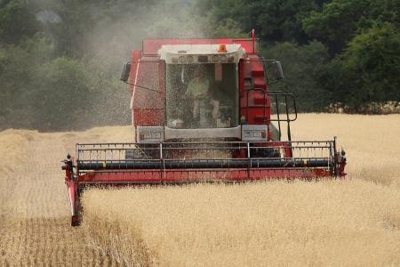arable: Combine harvester harvesting grain crop in arable field, UK