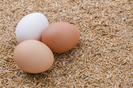 husk: Shallow focus of raw eggs in burlap sack on rice husk background Stock Photo