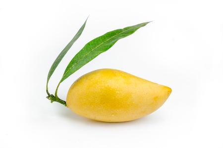 흰색 배경에 고립 된 노란색 망고 열매