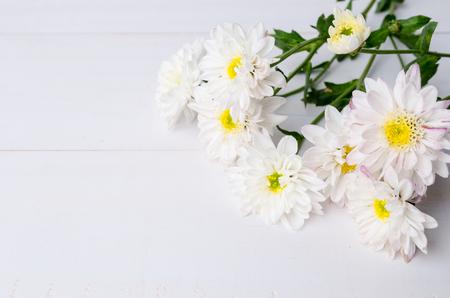 White chrysanthemum flowers on wooden background
