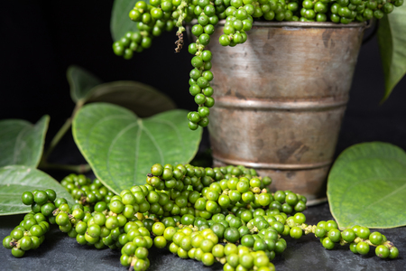 Fresh raw green peper in a plant pot with black background