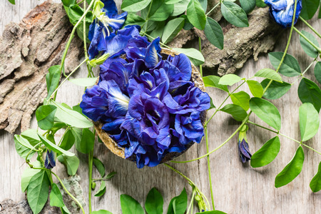 Close up of butterfly pea flower with leaves on wooden background. Archivio Fotografico