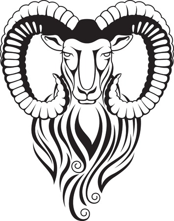 mouflon: Black and white illustration of a mountain goat - mouflon with large curved horns