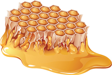 honey comb: Vector illustration of honey comb