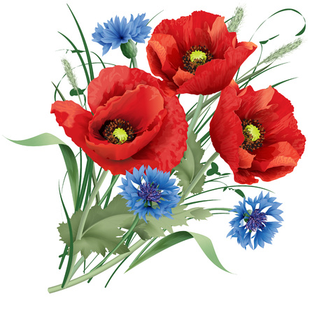 poppy field: Vector illustration bunch of red poppy flower with green leaves, blue cornflakes and hares-foot clover.