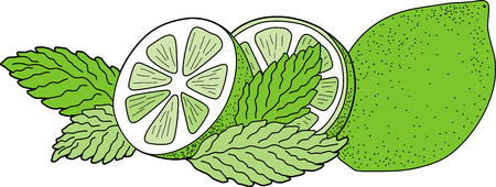 Illustration of green lime with mint leaves.