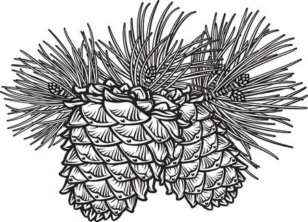arboles blanco y negro: vector dibujado a mano ilustración en blanco y negro de dos conos de pino con agujas