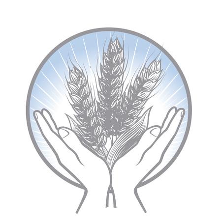 小麦の収穫を気にするな。サークルの 2 つの手が静かに小麦の穂を保持します。  イラスト・ベクター素材