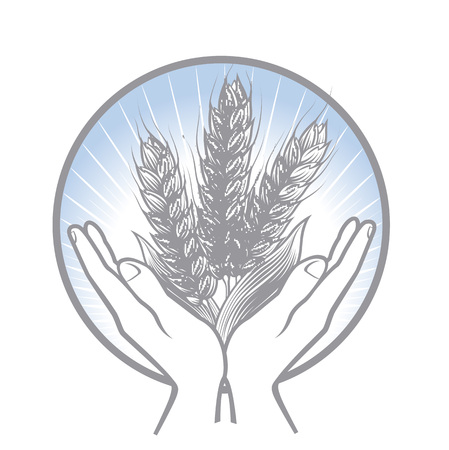 Taking care about the wheat harvest. Circle two hands gently holding wheat ears.