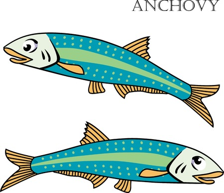 anchovy: Anchovy color cartoon vector illustration. Isolated Anchovy fishes on white background.