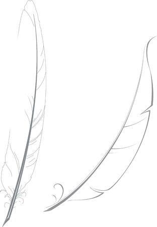 Vector hand drawn illustration of two feathers for writing.