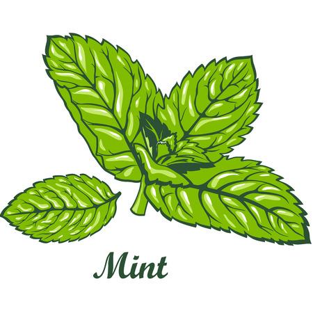 spearmint: Fresh green mint leaves isolated on white background vector illustration.
