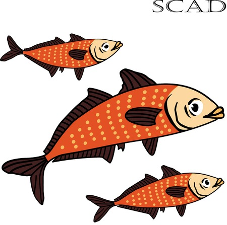 european anchovy: Scad fish color cartoon vector illustration. Isolated scad fishes on white background.