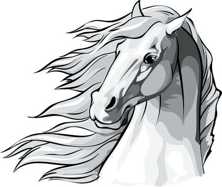 風に流れるたてがみの馬の頭のベクター イラストです。