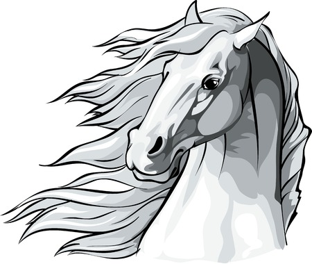 Vector illustration of a horse head with mane flowing in the wind.
