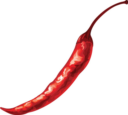 Watercolor vector drawing of red chili pepper.