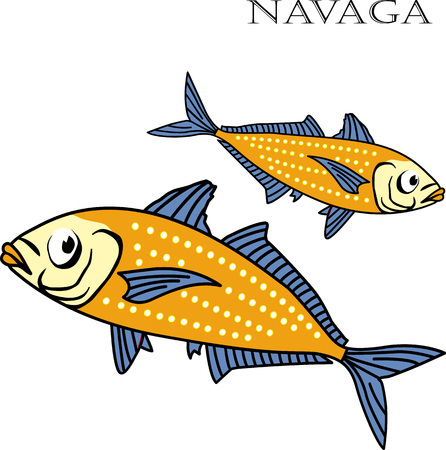 anchovy: Nagava fish color cartoon vector illustration. Isolated Nagava fishes on white background. Illustration