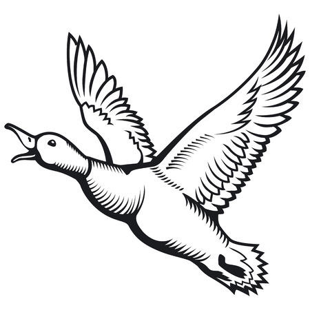 Flying wild duck. Duck hunting. Flying mallard duck. Vector illustration.