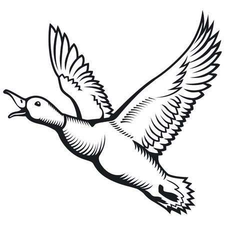 Flying wild duck. Duck hunting. Flying mallard duck. Vector illustration.