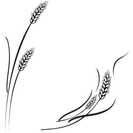 Vector Schwarz-Weiß-Darstellung von einigen reifen Weizen Ohren. Kann als Rahmen, Ecke oder Rand Gestaltungselement eingesetzt werden. Vektorgrafik