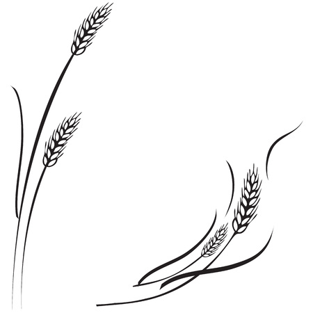 Vettore in bianco e nero illustrazione di un paio di spighe di grano maturo. Può essere usato come cornice, angolo o elemento di design di confine. Vettoriali