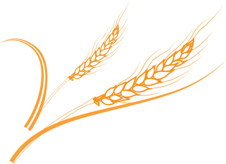 illustration of two gold ripe wheat ears. Can be used as frame, corner or border design element. Illustration
