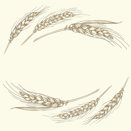 Vector hand drawn illustration of a few gold ripe wheat ears isolated on beige background. Can be used as frame, corner or border design element.