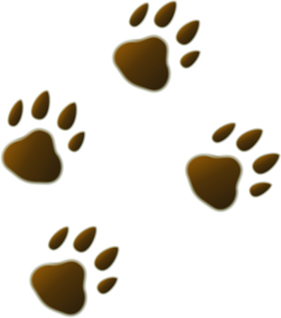 Four volumetric brown cartoon footprints trace of wild beast bear tiger. Vector illustration.